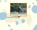 Лебяжьевский государственный природный зоологический заказник