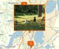 Где осуществляют дрессировку собак в Челябинске?