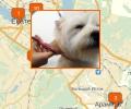 Где в Екатеринбурге есть парикмахерские для собак и кошек?