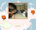 Где купить котенка в Екатеринбурге?