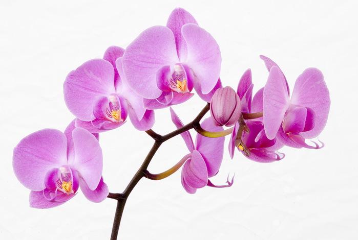 Орхидея купить в екатеринбурге