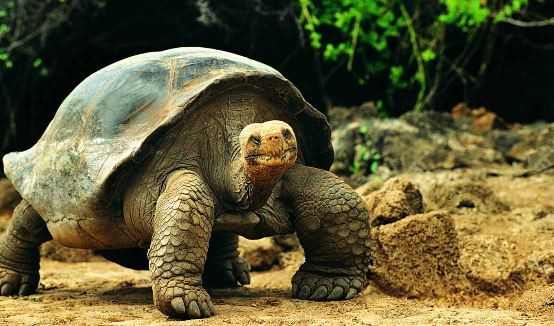Где купить черепаху в Екатеринбурге?