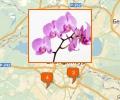 Где купить орхидеи в Екатеринбурге?