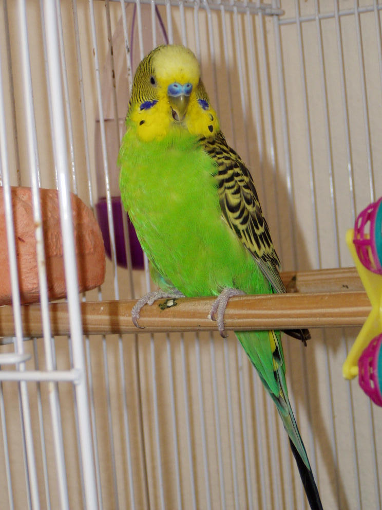 Где купить попугая и клетки в Екатеринбурге?