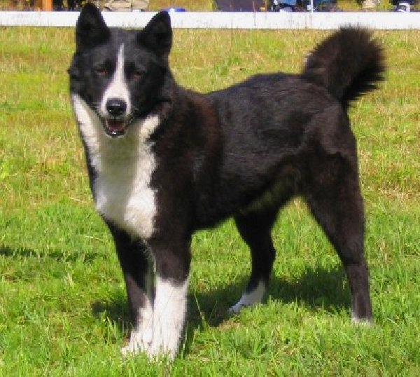 Что делать, если пропала собака в Екатеринбурге?