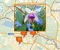 Где купить экзотические цветы в Екатеринбурге?