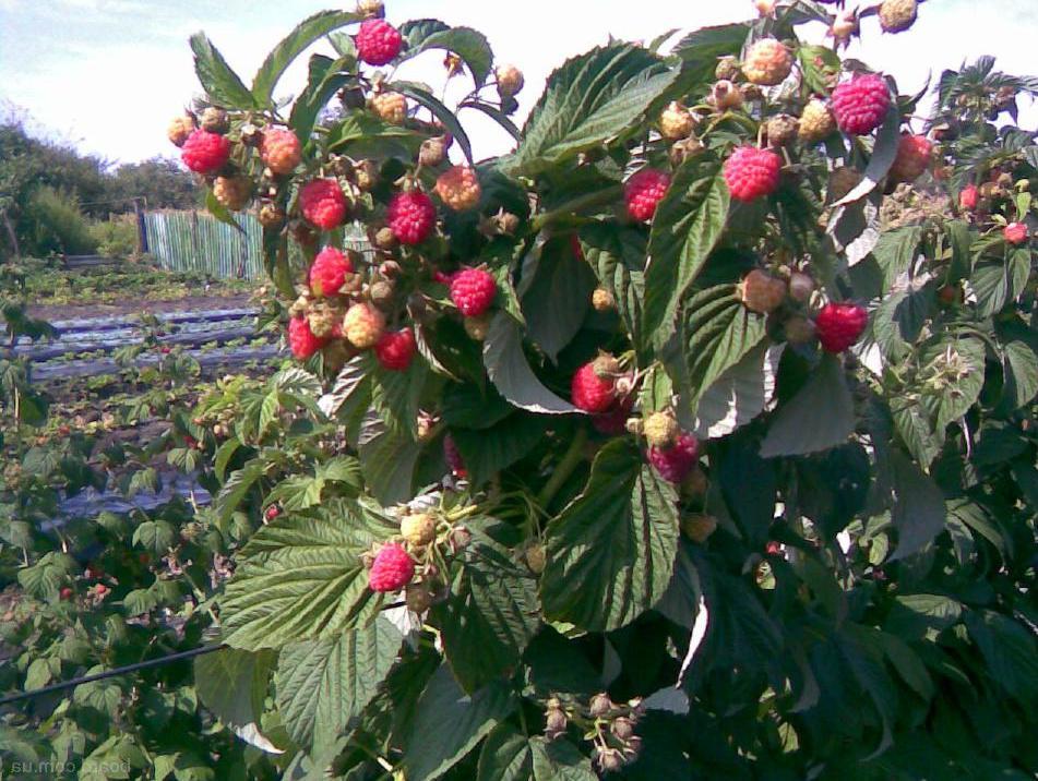 В каких питомниках купить сортовые деревья в Челябинске?