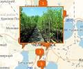 Где продают саженцы в Челябинске?