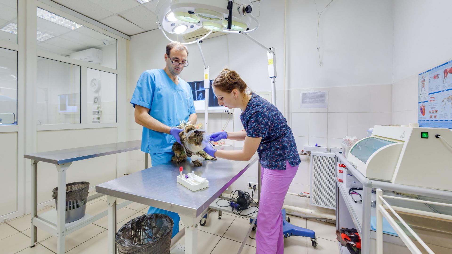 Где находятся ветеринарные лаборатории в Екатеринбурге?