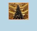 Где купить новогоднюю ёлку в Екатеринбурге?